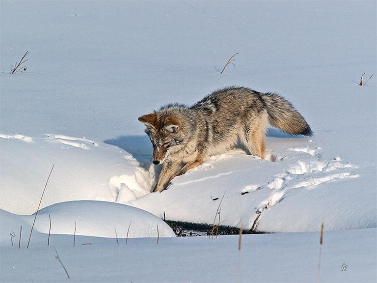 Member Profile: Wildlife Photographer Larry Going (2/6)