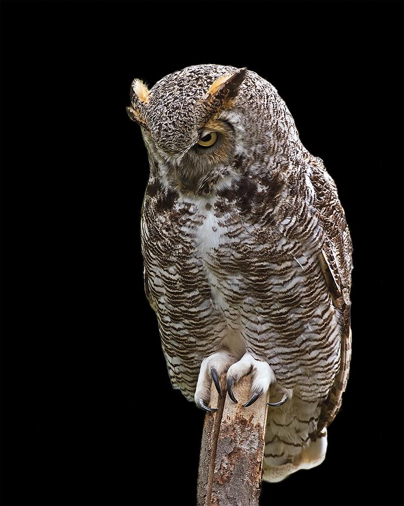 Member Profile: Wildlife Photographer Larry Going (3/6)
