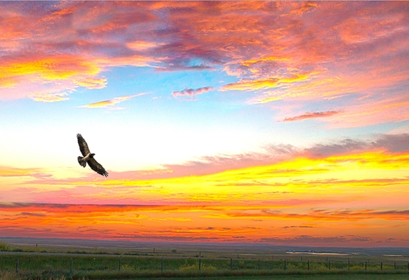 Grasslands National Park Sunset with Hawk; photographed near Crossfield Church,