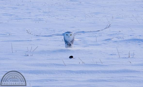 Owl: ISO 400, 1/1000sec, 88mm (55-300mm)