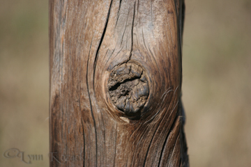 Worn Wood - Canon EOS Rebel XT, f/5.6, 1/250 sec, ISO-125, 250mm, AWB