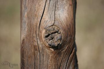 Worn Wood - Canon EOS Rebel XT, f/5.6, 1/250 sec, ISO-125, 250mm, AWB