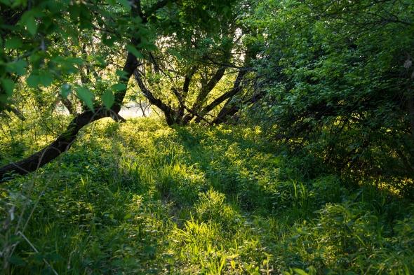 Loneys woods at sunset